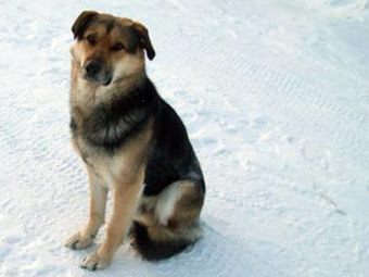 Якутский Хатико. Фото с сайта ykt.ru