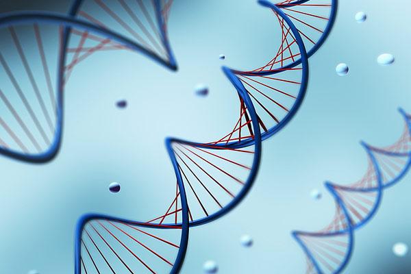 В хромосомах человека обнаружили четырехспиральную ДНК