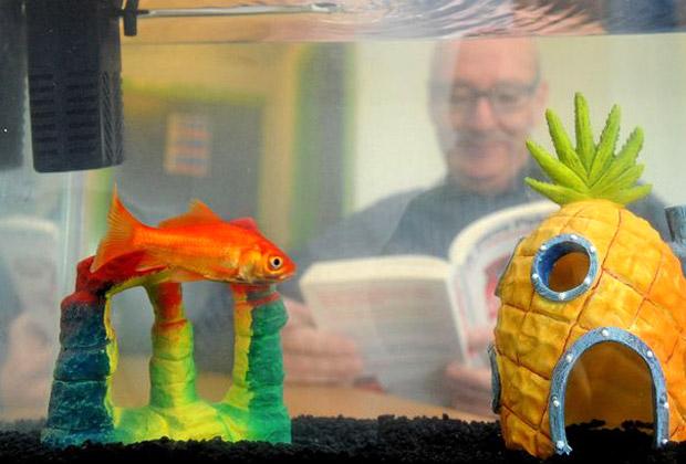 Золотая рыбка в номерах отеля Happy Guest Hotel Lodge в Чешире
