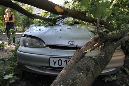 Ночной ураган в Москве вырвал десятки деревьев
