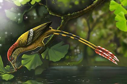 В Бразилии нашли первую птицу Гондваны