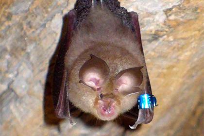Ученых напугал успешный эксперимент по переделке вируса летучих мышей