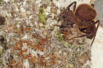 муравьи начали выращивать грибы гибели динозавров