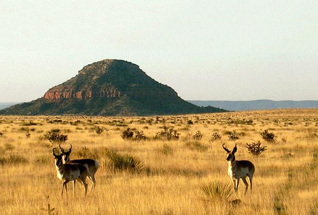 Ранчо Bell Ranch в штате Нью-Мексико