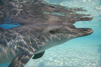 Пенисы мертвых дельфинов надули для изучения секса китов