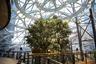 Одной из самых больших сложностей при строительстве стала транспортировка и высадка 16-тонного дерева Ficus rubiginosa. Его посадили 16 лет назад на одной из ферм Южной Калифорнии. У растения есть имя — Руби.