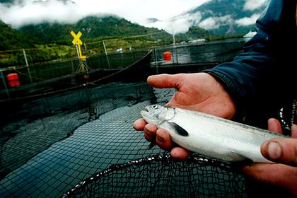 Норвегию назвали угрозой российской рыбе