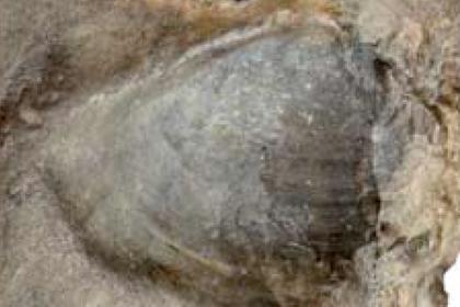 Найдено самое большое вымершее животное