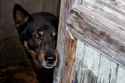 Собаки оказались угрозой для человечества