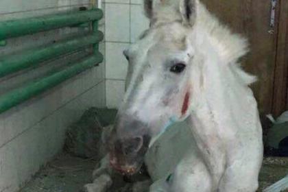 Следователи отомстят за издевательства над полицейскими лошадьми