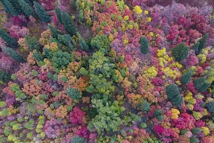 Снятый на видео в США аномальный лес шокировал путешественников