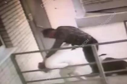 Собака спасла россиянку от пытавшегося зарезать ее мужчины