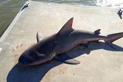 Двухметровая акула прыгнула в лодку с детьми из реки с крокодилами