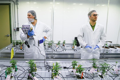 В канадском колледже появилось марихуановедение