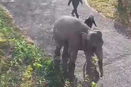Слоны прогулялись по улицам российского города и попали на видео
