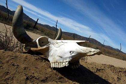 Предсказано полное вымирание дикой природы