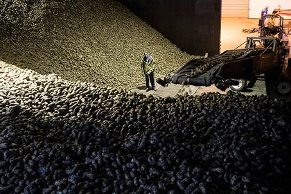 Власти Подмосковья анонсировали рост экспорта сельхозпродукции