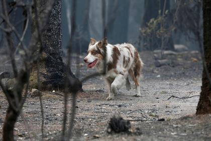 Справившую нужду во дворе собаку обвинили в расовой нетерпимости
