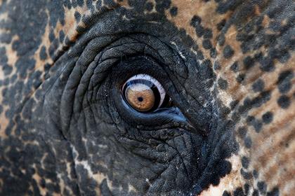 Защитник посевов хотел швырнуть в слонов бомбу и поплатился
