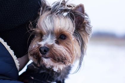 В Заполярье спустя неделю нашелся унесенный ветром пес