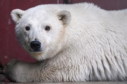 Россиян научат общаться с белыми медведями