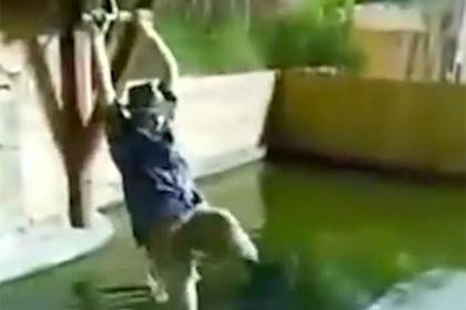 Любитель риска катался на тарзанке над аллигаторами и упал на них