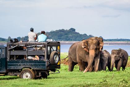 Карри, дуриан и Будда: как правильно отдыхать на Шри-Ланке