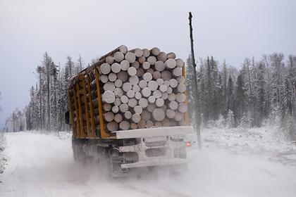 Медведев ответил на вопрос о вывозе леса в Китай