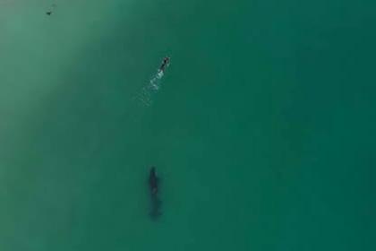 Киты-убийцы заинтересовались похожей на тюленя пловчихой