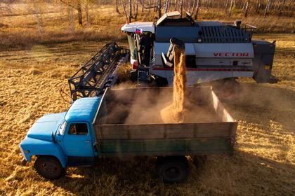В Подмосковье увеличат производство продовольственной пшеницы