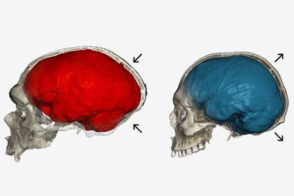 Раскрыты последствия скрещивания людей с неандертальцами