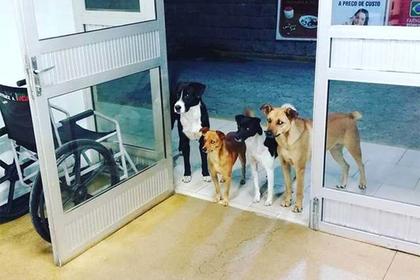 Свора собак собралась у больницы ради бездомного хозяина и растрогала врачей