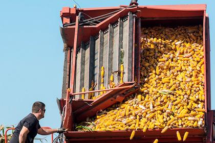 Сельскохозяйственный бум в России оказался ошибкой