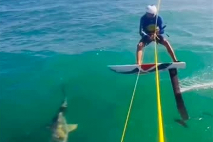 Серфер споткнулся об акулу и упал