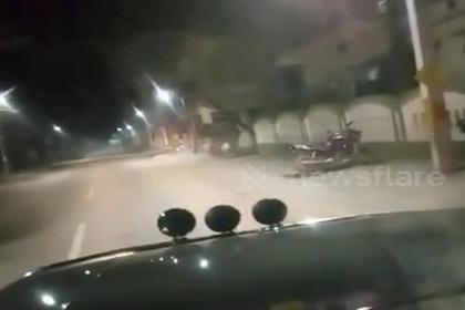 Противостояние полицейских и дикого слона сняли на видео