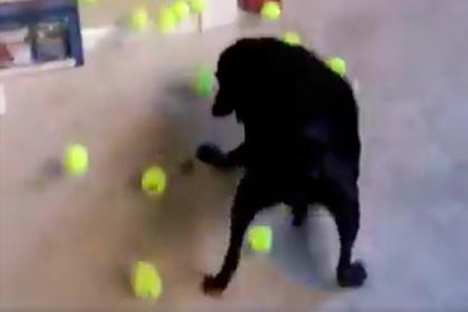 Девушка смутила собаку ворохом мячиков и насмешила пользователей сети