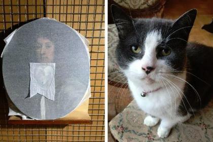 Кошка искусствоведа испортила картину за полмиллиона рублей