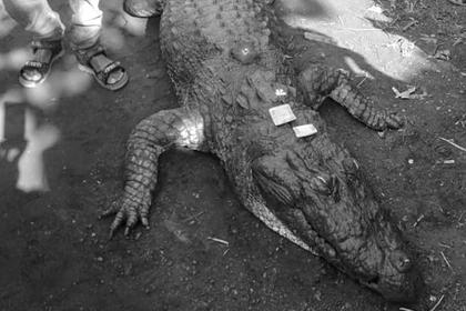 500 человек проводили в последний путь любимого 130-летнего крокодила