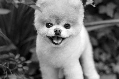 «Самый милый в мире пес» умер от тоски