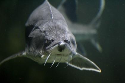 Рыбным костям нашли применение в космосе