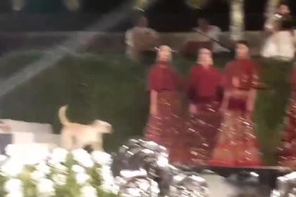 Бродячий пес ворвался на подиум во время показа и сорвал шоу