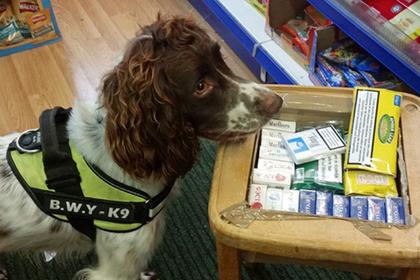 На слишком успешную полицейскую собаку устроили охоту с вознаграждением