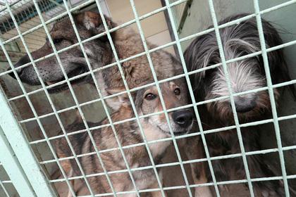 Владелец «концлагеря для собак» заморил голодом 47 животных и уехал отдыхать