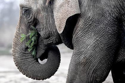Слониха убила погонщика у храма