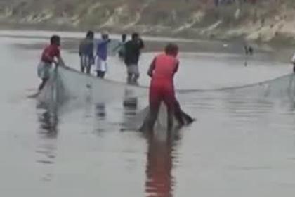 Вся деревня пришла спасать редкого дельфина из канала