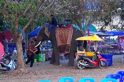 Обезумевший слон напал на девушку и помахал ею