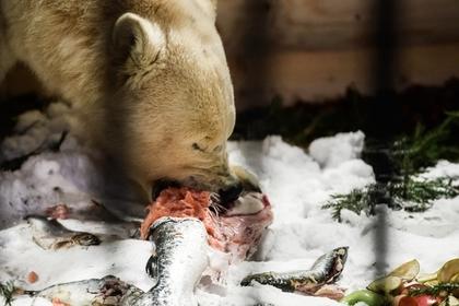 В России произошло нашествие белых медведей