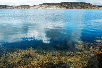Мурманские ученые создадут из водорослей БАДы и лекарства для северян