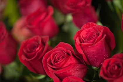 Восьмилетний школьник потратил все карманные деньги на розы для 68 сверстниц
