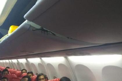Скорпион пробрался в салон самолета и всполошил пассажиров